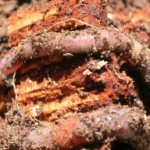 Worms Rule 150x150 Understanding Worms And Worm Farming